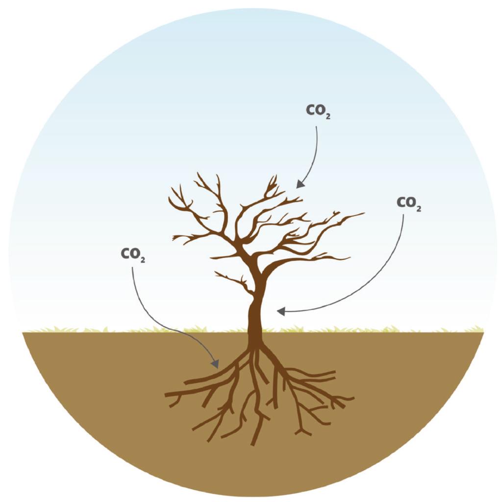 Binden stikstof, fijnstof en CO2 Fruit Your World