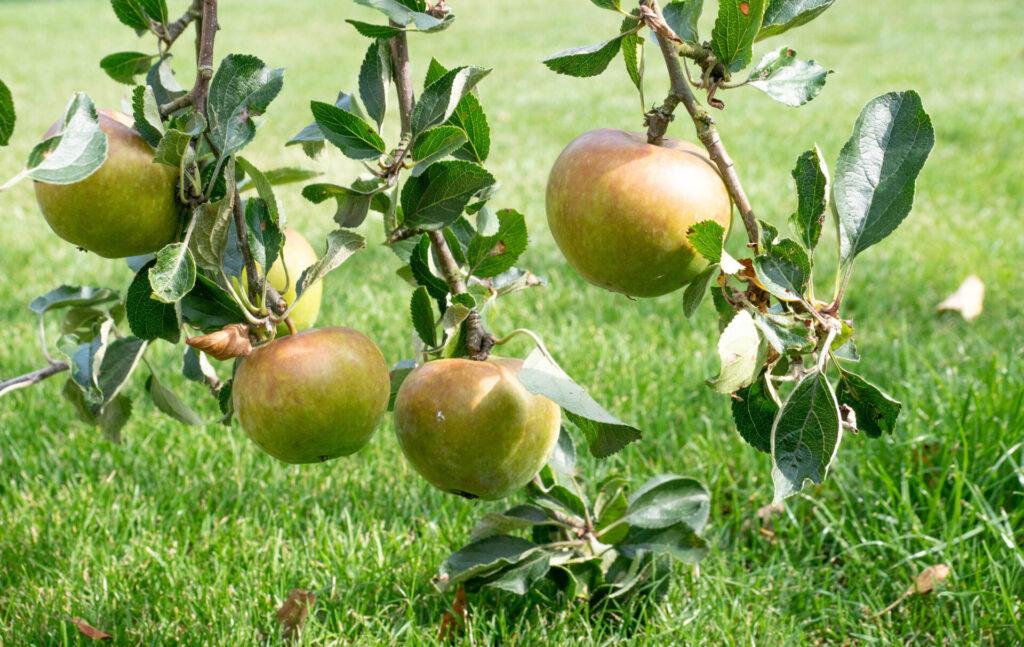 Appels Fruit Your World