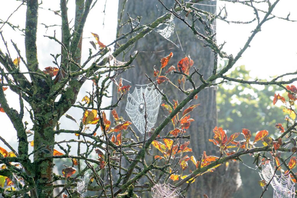 Bomen habitat for insecten en spinnen