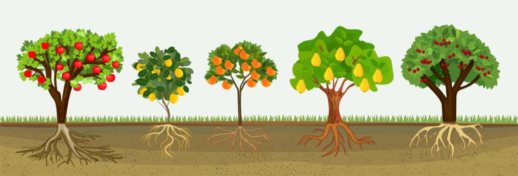 Fruit Your World Bomen